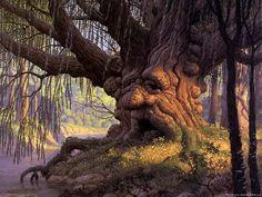 """Résultat de recherche d'images pour """"old trees"""""""