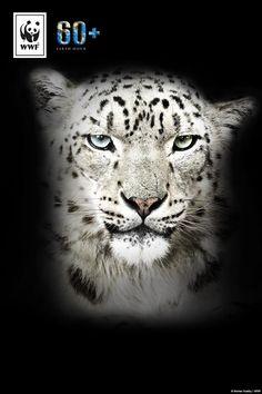 Wusstest ihr, dass der Schneeleopard 30 Prozent seines Lebensraumes verlieren könnte? Eine von sechs Tierarten ist durch den Klimawandel vom Aussterben bedroht. Macht mit bei der #EarthHour und setzt ein Zeichen für mehr Klima- und Artenschutz! www.wwf.de/earthhour