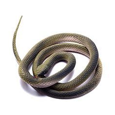 Safari Ltd Incredible Creatures Chain Kingsnake Toy Figurine | SnakeGifts.com