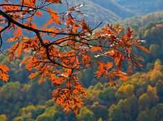 16 Things to Love about Charlottesville in Fall - I'm sure I could come up with more.