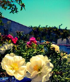 Colourful Summer by sotiria8 on DeviantArt