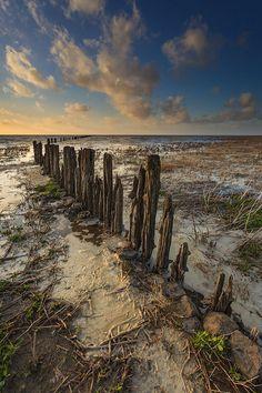 Mudflats, Westhoek, Friesland (NL)