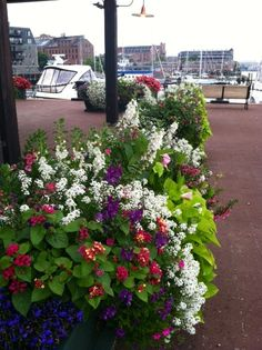 Great annuals near the Boston Yacht Haven on the Harborwalk.