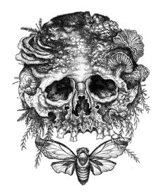 Mister Beaudry: Skull, Cicada and Mold.