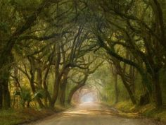 Why South Carolina could be the most hauntingly beautiful place on earth