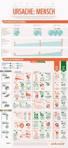 Unser aktuelles Konsumverhalten stellt eine große Gefahr für unseren Planeten dar. Doch wie beeinflusst unser Konsum gefährdete Tierarten, z. B. den Tiger? Und was passiert, wenn wir nicht bald handeln? Unsere Infografik: www.wwf.de/unser-fussabdruck