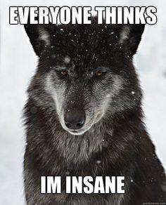 misunderstood insanity wolf meme