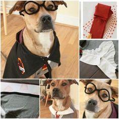 DIY Harry Potter Dog Costume 1