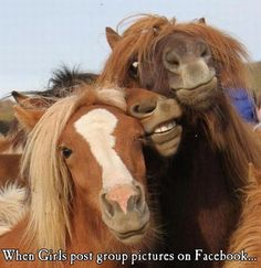 funny animal horse when girls post group pictures on facebook