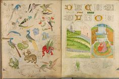 The stunning illuminated sketchbook of German monk Stephan Schriber, 1494. Display in my library.