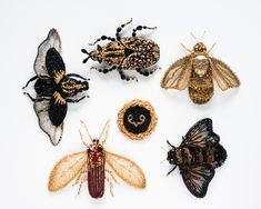 New collection of brooches — Eve Anders