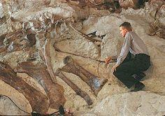 Google Image Result for http://www.nationalparkstraveler.com/files/storyphotos/DINO-Fossils_2.jpg%3F0