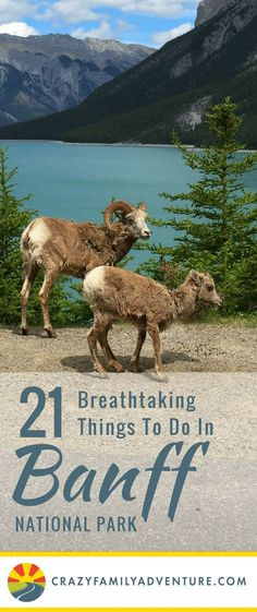 Things To Do In Banff National Park! Here are 21 unbelievable things to do in Banff National Park. Stand on a Glacier, ride a gondola and take in the breathtaking scenery to name a few! Tulum, Places To Travel, Places To Go, Travel Destinations, Travel Tips, Rv Travel, Outdoor Travel, Travel Ideas, Outdoor Gear