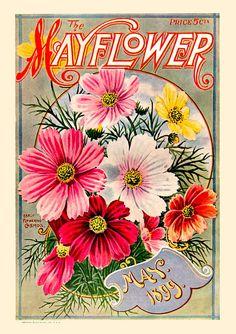 Mayflower 1899-05 ❤ Vintage Art Seed Label Poster Print! ☮~ღ~*~*✿⊱ レ o √ 乇 !! - Victorian Style.
