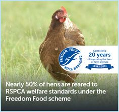 Nearly 50% of hens are reared to RSPCA welfare standards under the Freedom Food scheme.