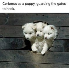 44 Random Tidbits For All Your Comedic Wants And Desires - Memebase - Funny Memes Harry Potter, Cerberus, Disney, Runescape 2007, Greek Mythology, Ferret, Heaven, Husky, Dogs And Puppies
