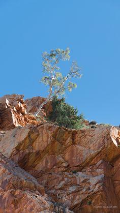 Ormiston Gorge Northern Territory Australia Solomon Islands, Marshall Islands, Vanuatu, Papua New Guinea, Fiji, Landscape Photos, Wonders Of The World, Grand Canyon, Landscapes