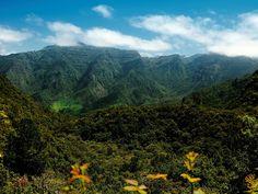 Luxuriant vegetation by Madeira Islands Tourism, via Flickr, Madeira, Portugal