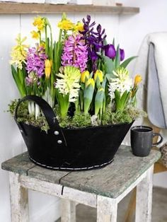 Spring bulbs in a basket Indoor Flowers, Bulb Flowers, Spring Flower Arrangements, Spring Flowers, Garden Bulbs, Garden Pots, Bonsai Plante, Flower Pot Design, Spring Bulbs