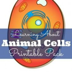 FREE Animal Cells Printable Pack