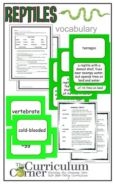 Weekly Themed Vocabulary Words & Activities - Set 3 (Reptiles) - Reptile Vocabulary Resources from The Curriculum Corner FREE - Vocabulary Notebook, Vocabulary Words, Reptiles, Amphibians, Vocabulary Definition, Science Curriculum, Thematic Units, Nature Study, Teaching Tools