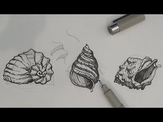 This tutorial provides pencil and pen and ink drawing tips and techniques on how to draw sea shells. Basic forms and the line of balance is used to make the . Drawing Lessons, Drawing Techniques, Art Lessons, Drawing Tips, Plant Drawing, Painting & Drawing, Pencil Drawings, Art Drawings, Shell Drawing