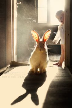 What a beautiful picture of a beautiful bunny...and friend!