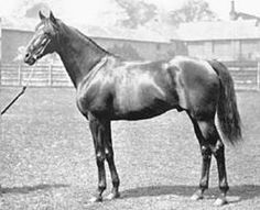 Ajax  Fighting Fox-Amie By Clamart.  5 Starts 5 Wins. Winner Of Two Biggest Race In France, The Prix Du Jockey Club  And Grand Prix De Paris. Best Known As Sire Of Teddy, A Very Influential Sire In U.S. 20th Century.