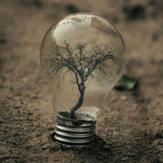 I thought was a good idea for those old lightbulbs to be reused as mini green houses for the new starts................. Conceptual Photos by Adrian Limani