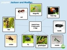 Word web fun in Kindergarten with Popplet app learning about insects and nouns. Post includes info on using app and FREE printable for literacy center