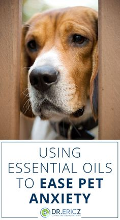Essential Oils for dog anxiety will help your dog when you leave them home alone. This DIY Spray for Dogs with Anxiety is perfect to help them relax. Dog Separation Anxiety, Dog Anxiety, Doterra, Essential Oils Dogs, Dog Calming Essential Oils, Aromatherapy For Dogs, Relaxed Dog, Oils For Dogs, Sleeping Dogs