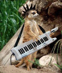 Musical Animals  Leslie Hanger #InnerAnimal #SpiritHoods