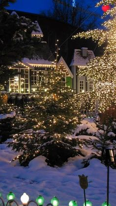 Tra i rami innevati si vede il piacere della festa. #Dalani #Natale #Luci #Atmosfera #Auguri