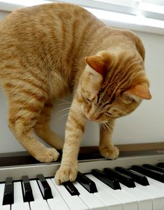 chat pianiste