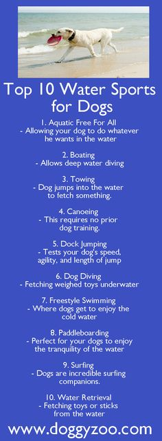 Top 10 Water Sports for Dogs