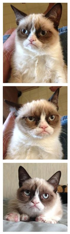 I cannot get enough of Grumpy Cat. I'm currently plotting ways to cat-nap him and make him mine.