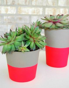 蛍光ピンクで塗った植木鉢