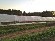 I wrote this post with the hope of helping small-scale farmers build a large, sturdy and economical high tunnel. This design is perfect for ...