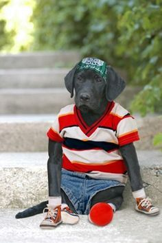 ANIMALS IN CLOTHES - Yahoo Image Search Results