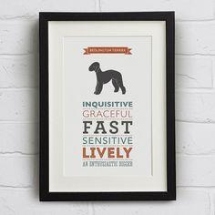 Bedlington Terrier Dog Breed Traits Print  Great by WellBredDesign, £12.95