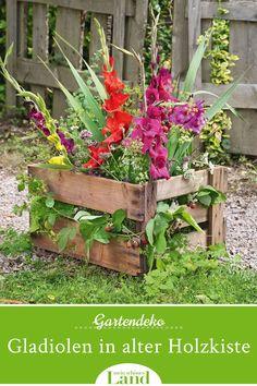 Hydrangea Seeds, Hydrangea Care, Hydrangea Flower, Balcony Plants, Balcony Garden, Fleurs Diy, Rose Trees, Diy Décoration, Potting Soil