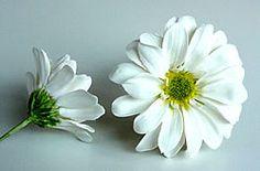 Making Cold Porcelain Chrysanthemums