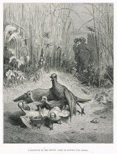 L'alouette et ses petits avec le maître d'un champ - fable de Jean de La Fontaine illustrée par Gustave Doré - MAS Estampes Anciennes - MAS Antique Prints