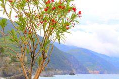 Badestrand Monterosso an der ligurischen Küste von Italien Cinque Terre, Strand, Mountains, Nature, Plants, Travel, Italy, Landscape, Vacation