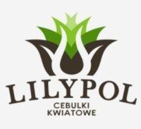 LILYPOL- cebule kwiatowe