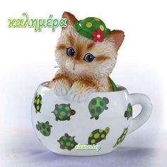 Out of My Shell Kitten / Cat in a Tea Cup Bradford - Cups of Affection Teacup Kitten, Funny Animals, Cute Animals, Coin Art, Cool Artwork, Animal Drawings, Pet Birds, Animal Pictures, Cats And Kittens