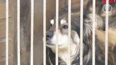 Temat czipowania powraca. Czy Ustawa o ochronie zwierząt zostanie przyjęta?