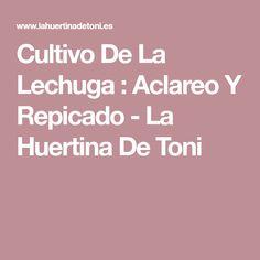 Cultivo De La Lechuga : Aclareo Y Repicado - La Huertina De Toni