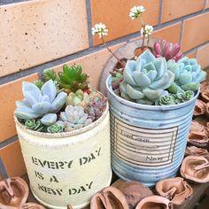 リメイク缶/賃貸/ベランダガーデン/ベランダガーデニング/ベランダ/コンテスト参加中…などのインテリア実例 - 2016-05-04 20:01:38 | RoomClip(ルームクリップ) Succulents In Containers, Cacti And Succulents, Planting Succulents, Cactus Plants, Planting Flowers, Succulent Bowls, Succulent Gardening, Succulent Arrangements, Small Garden Fairies