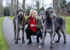 The Irish Wolfhound: Why the archetypal 'gentle giant' was a favourite of the aristocracy, John F. Kennedy and now, Trudie Styler – Country Life Wolfhound Puppies, Trudie Styler, Gentle Giant, Country Life, Dog Pictures, Cute Dogs, Irish Wolfhounds, Cats, Police